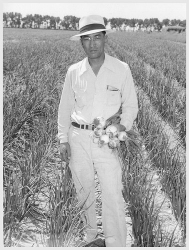 Henry Inouye, evacuee supervisor of the Granada Relocation Center farm, and a field of onions produced on the center farm. Photographer: McClelland, Joe Amache, Colorado
