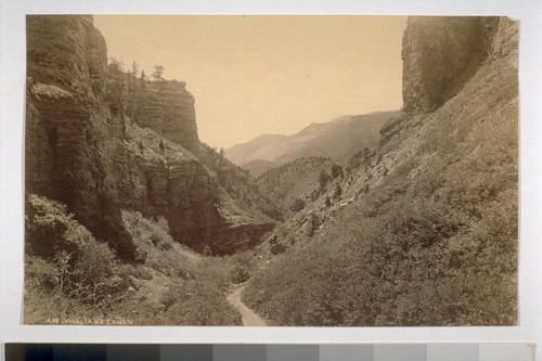 William's Canon [Colorado?]. 460