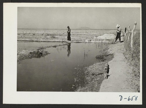 Irrigating winter pasture this relocation center. Photographer: Stewart, Francis Rivers, Arizona