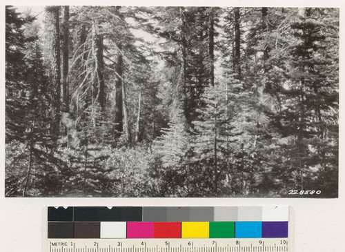 Plot 2-I. Western yellow pine- white fir type, Fruit Growers Supply Company, Lassen N.F. before logging