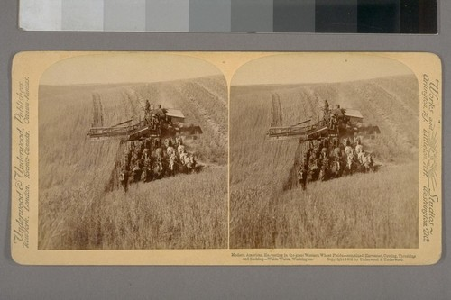 Modern American Harvesting in the Great Western Wheat Fields--Combined Harvester, Cutting, Threshing and Sacking--Walla Walla, Washington