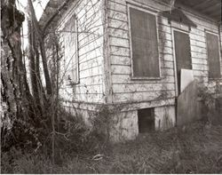 Luther Burbank cottage covered in dead vines and boarded up, 1978