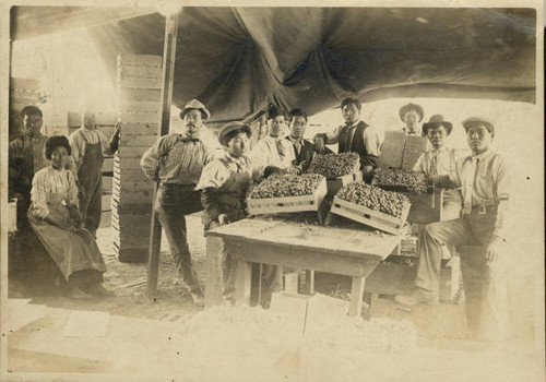 Florin tokay grape packing shed and workers in Florin