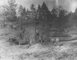 Logging crew at Duncans Mills Land and Lumber Company with redwood logs and a Dolbeer donkey steam engine, 1899