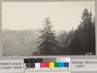 Timber stand on Big Pine Mountain, Los Padres National Forest with sugar pine silhouette in foreground. 1937. Metcalf