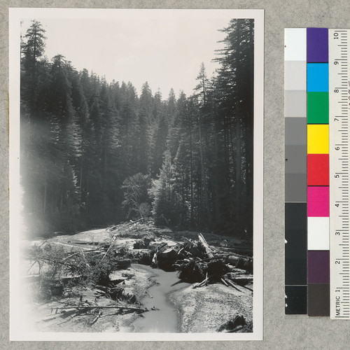 Debris in Bull Creek as a result of Dec. 1955 floods. Mostly from logging operations. Aug. 12, 1956. E.F