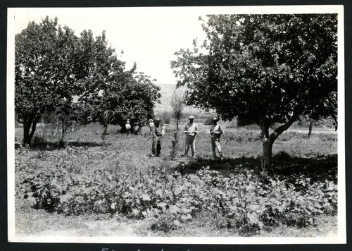 Picking figs and apricots in the orchard at El Rosario