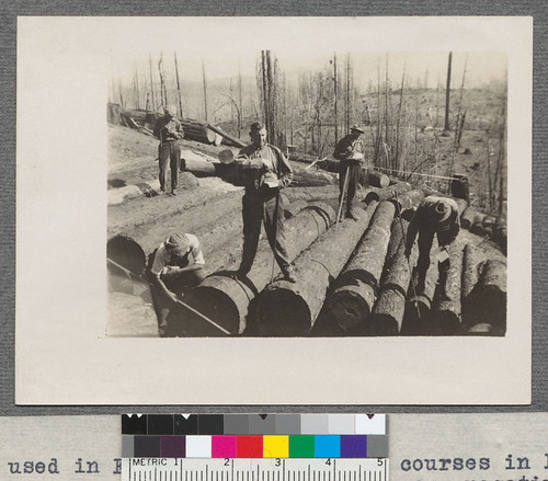 Scaling Logs. Cuts used in First Announcement of courses in Forestry October, 1916. Bruce - negatives