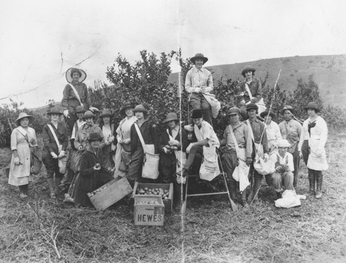 Hewes Ranch orchard with women pickers, 1920