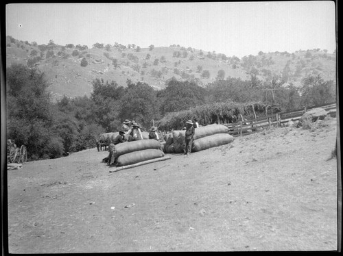 Yokuts Indians with bales of wool. Tule River Reservation, 50 miles from Porterville, California