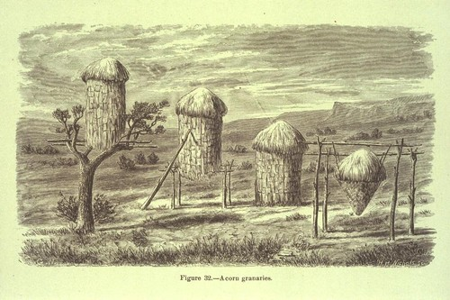 Miwok acorn granaries [book illustration]