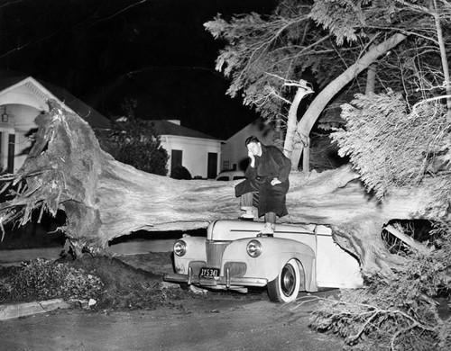 Car wrecked by a fallen tree