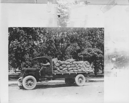 Unidentified man driving a flat-bed truck full of sacks of grain, Petaluma, California, about 1925
