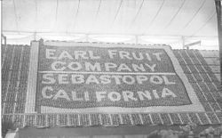 1911 Gravenstein Apple Show display by the Earl Fruit Company of Vacaville