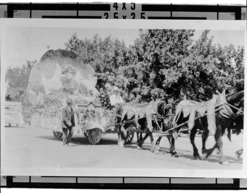 Sonoma float pulled by a team of horses in a Butter and Eggs Day Parade, Petaluma, California, about 1925