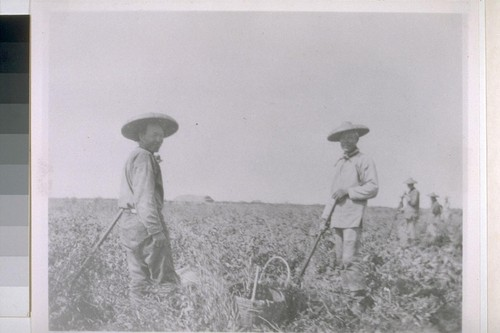 [Chinese field workers.]