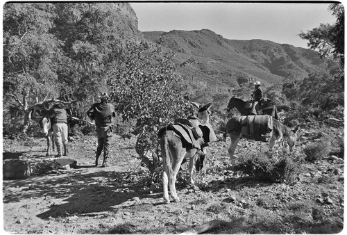 Adjusting packs and collecting fodder on trail up Arroyo del Parral as far as La Higuerilla