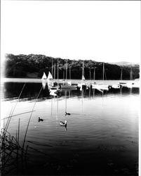 Sailboats on Lake Ralphine, Santa Rosa, California, 1965 ...