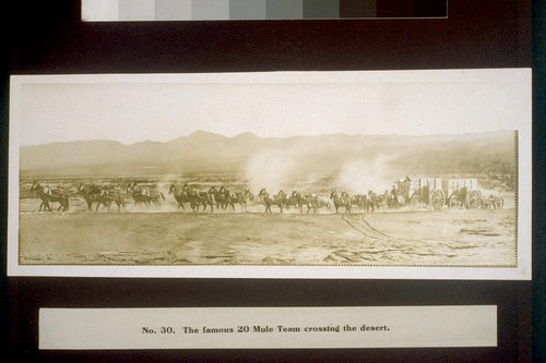 The famous 20 Mule Team crossing the desert