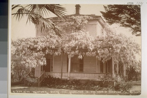 "The wisteria seeks the house top in the ""Land of Sunshine, California"". No. 773"