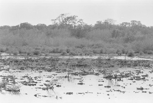 View of a mangrove forest, Isla de Salamanca, Colombia, 1977