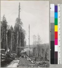 "Redwood. Spar tree at landing on ""D"" line. Hammond Redwood Company. Maple Creek operations, Big Lagoon tract. Humboldt County. Timber runs up to 200 M [thousand] per acre. Tree was moved 60' upright. See also 6968-6969. Rigged and in use. Boom is 70' long. Tree is 10' diameter; 175' to bull block and 45"" at the top end. Pole in background not used. For base see #6967. 7-28-41 E.F"