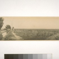 Irrig. [irrigation] Ditch and rice field, River Farms - Yolo Co. [county] ...