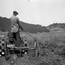 Cutting Vetch and Oats on the J.B. Pacheco Ranch in Ignacio, Marin ...
