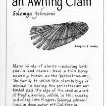 "Awning Clam - Solemya johnsoni (Newspaper Column title ""The Ocean World"")"