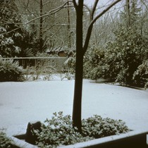 Backyard of Stumpf residence showing snowfall