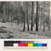 1 mile west of Oregon Peak. Old growth-young growth (321) stand of ...