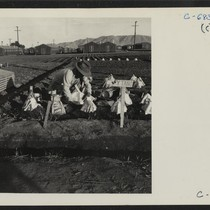 Manzanar, Calif.--Evacuees of Japanese ancestry are growing flourishing truck crops for their ...