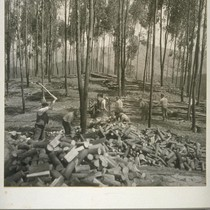 Pacific Cooperative League cutting wood in Berkeley Hills, May 1933