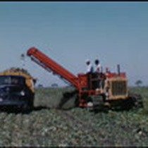 Experimental two row harvester