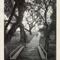 Bridge with benches and oak trees