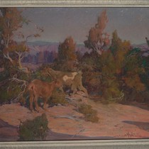 Among the Cedars [Goats in New Mexico Landscape]