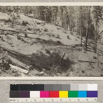 150190 United States Forest Service. University of California permanent sample plot number ...