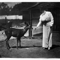 Anita Baldwin Feeding her Deer Named Caza