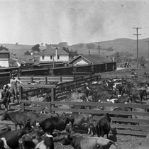 Cattle Show at Valley Ford, September 1926 [photograph]