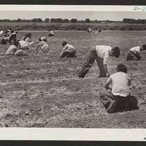 Fourth grade children weeding their victory garden. Photographer: McClelland, Joe Amache, Colorado