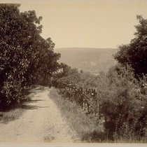 Entrance Drive, to Residence of Hon. Wm. McPherson Hill