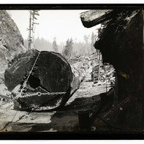 Among the California Redwoods. New Way, 24 Logs to Load, Reg No.7/Excelsior ...