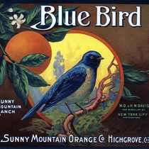 "Crate label, ""Blue Bird."" Sunny Mountain Orange Co. Highgrove, Calif"