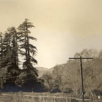 Between White's Hill and the Poor Farm near San Geronimo, California, March ...