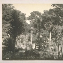Arizona Garden on the grounds of Hotel Del Monte, April 20, 1895, ...