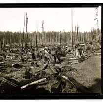 After logging, Vance's,Mad River/Among the Redwoods in California [Results of Logging/unknown]