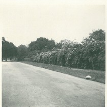 Ashbourne Drive/Chelten Way