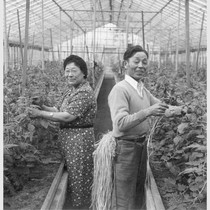 Mr. and Mrs. Seinosuke Nishimura of Seattle inside one of their greenhouses ...