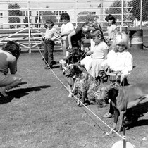 75th Anniversary celebration--Dog Show