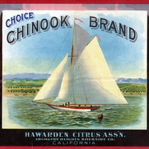 "Crate label, ""Choice Chinook Brand."" Hawarden Citrus Ass'n. Arlington Heights Riverside Co. ..."